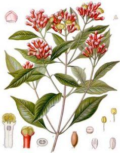 Chiodi di garofano ingredienti balsamo di tigre