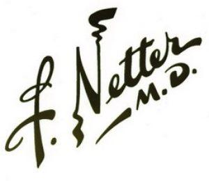 Frank H Netter autore Atlante anatomia umana